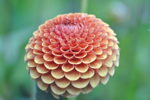 47361-victoria-british-columbia-flower-butchart-gardens